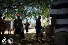 esterilizacion_isla_fuerte_2017_252