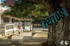 esterilizacion_isla_fuerte_2017_40