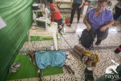 esterilizacion-puerto-narino-2019-143