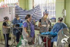 esterilizacion-puerto-narino-2019-164