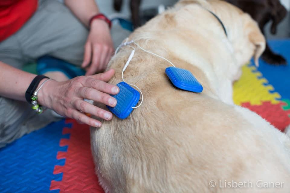 Fisioterapia de animales