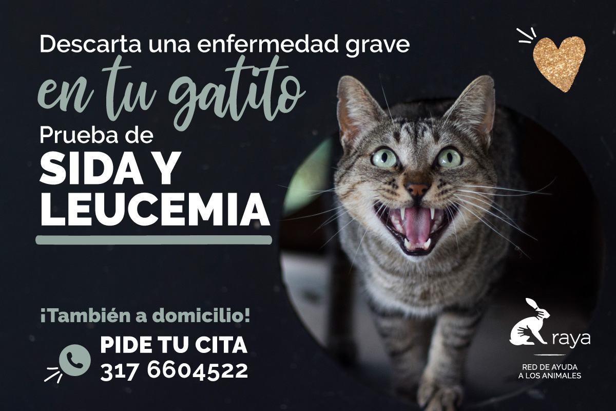 //www.corporacionraya.org/wp-content/uploads/2020/06/RAYA-Prueba-sida-y-leucemia-junio-2020-h.jpg