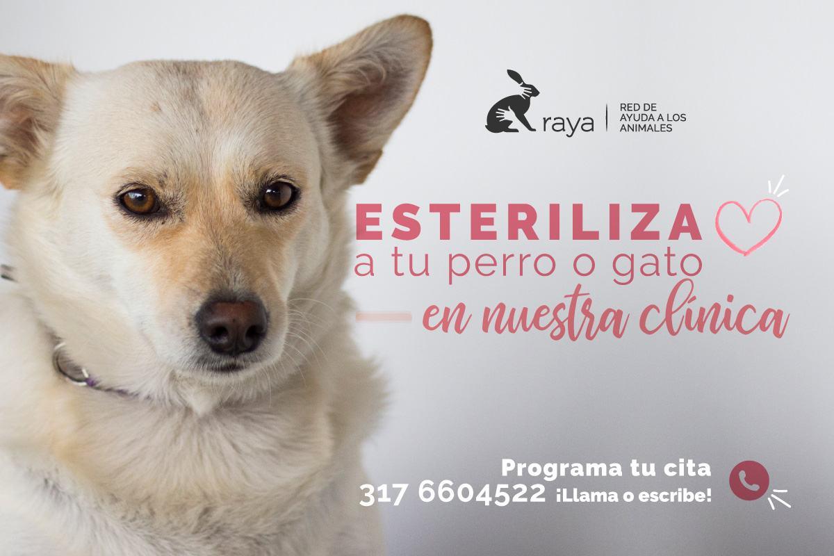 //www.corporacionraya.org/wp-content/uploads/2020/07/esterilizacion-perros-gatos-medellin-raya.jpg