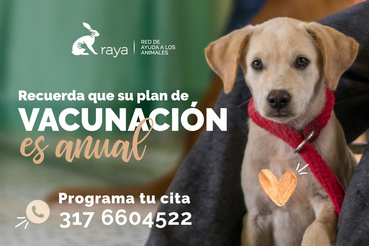 //www.corporacionraya.org/wp-content/uploads/2020/07/raya-vacunacion-perros-gatos.jpg