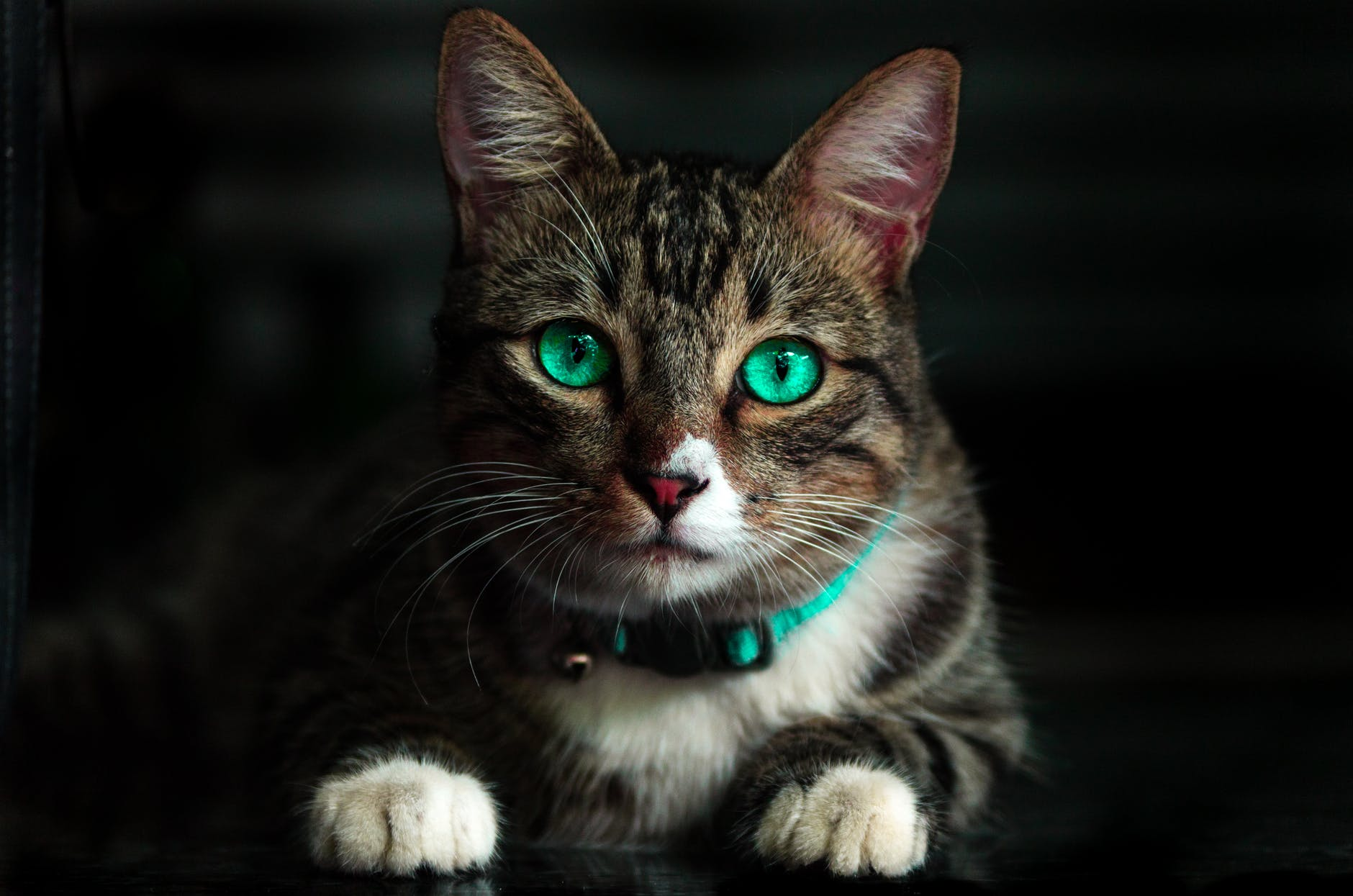 adorable animal blur cat