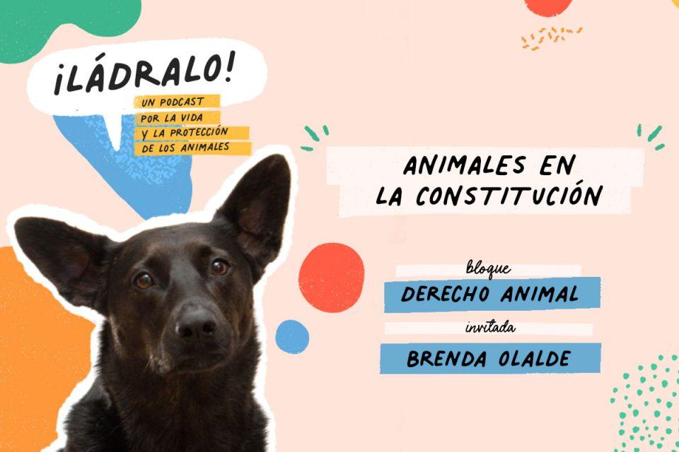 Ládralo Animales en la Constitución